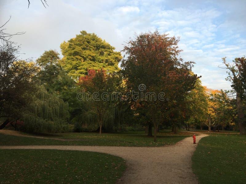 Outono no parque fotografia de stock