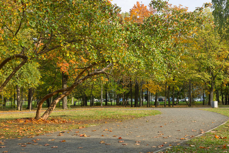 outono no parque da cidade imagem de stock