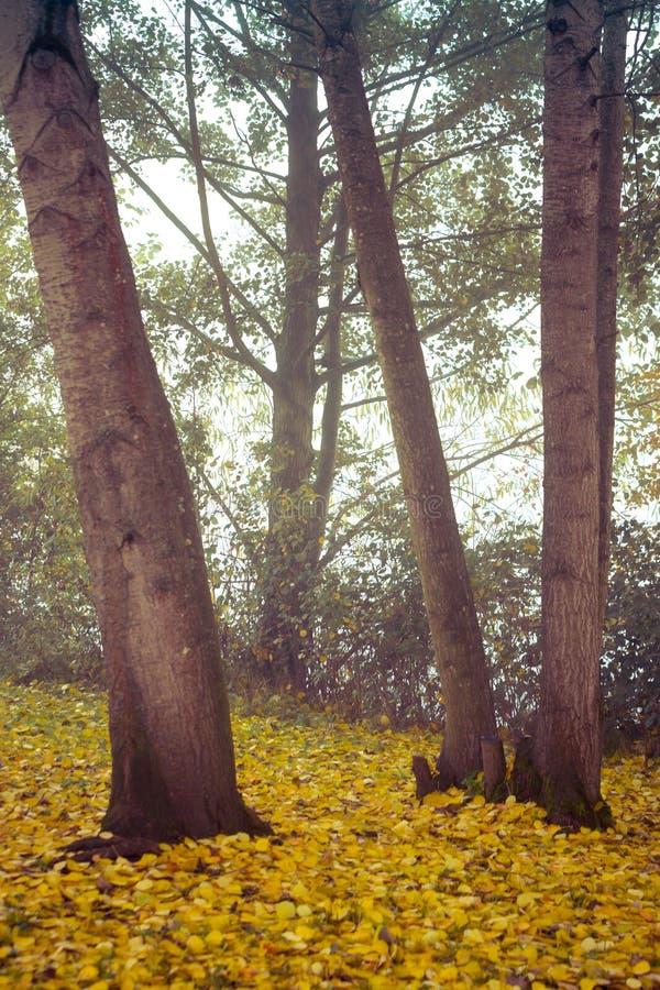 outono no parque de Goldsworth em Woking imagem de stock