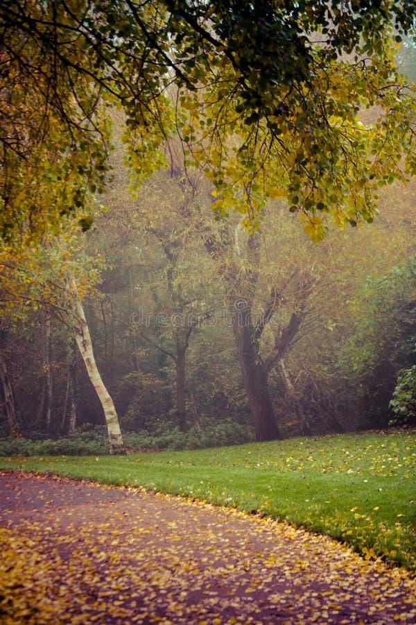 outono no parque de Goldsworth em Woking fotos de stock royalty free