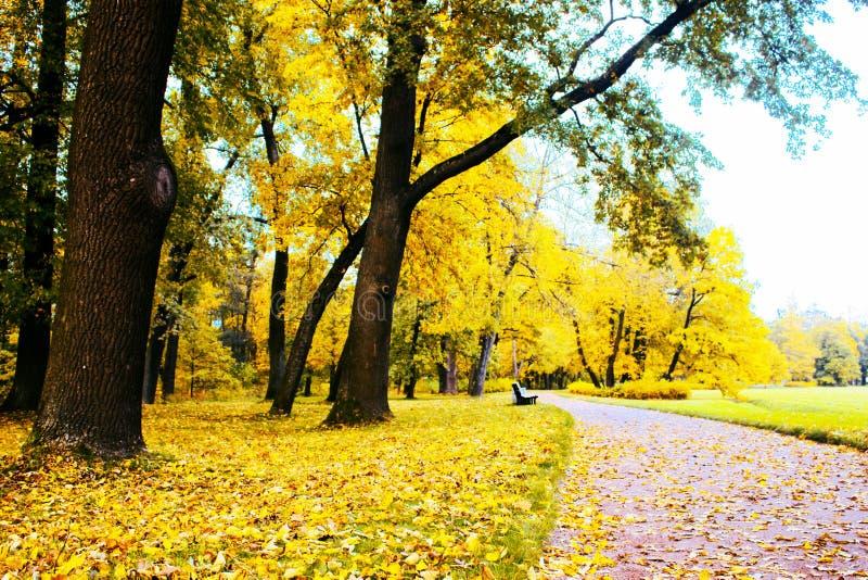outono no parque e nas ruas imagens de stock royalty free