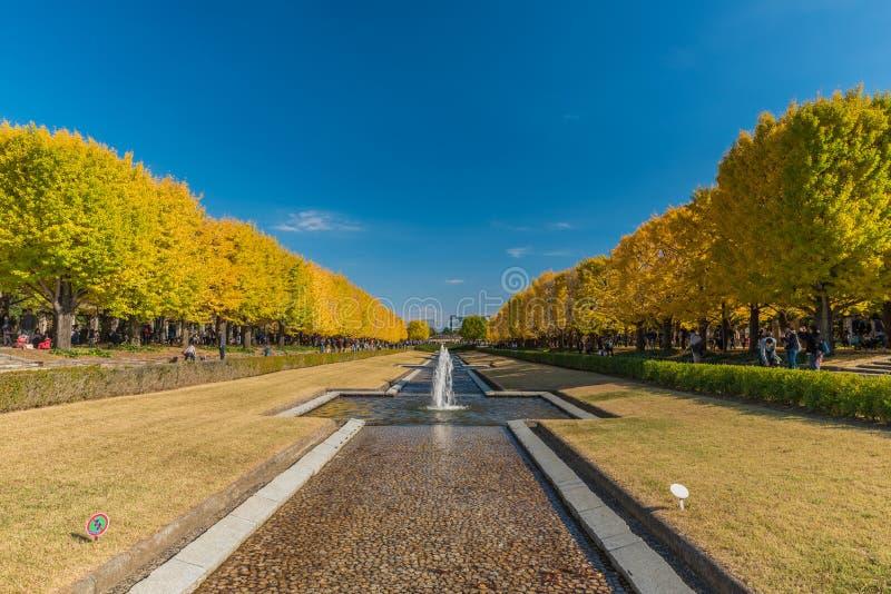 outono no parque memorável de Showa, Tachikawa, Japão foto de stock royalty free