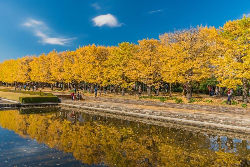 outono no parque memorável de Showa, Tachikawa, Japão imagens de stock royalty free