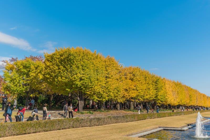 outono no parque memorável de Showa, Tachikawa, Japão fotografia de stock