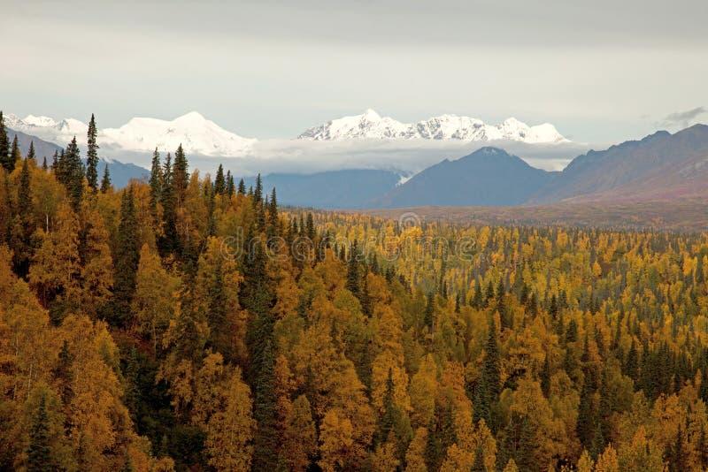 Outono no parque nacional de Denali fotografia de stock royalty free