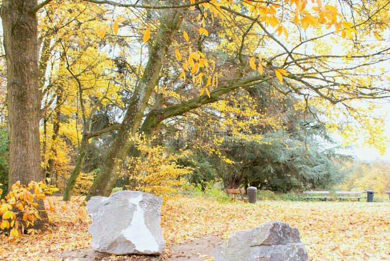 Outono no parque Parc Astrid fotografia de stock royalty free