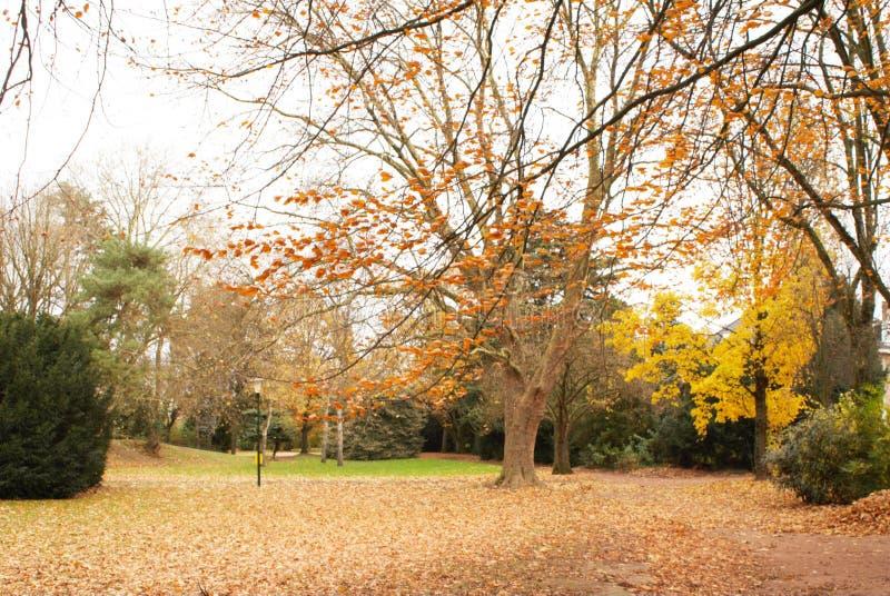 Outono no parque Parc de Scherdermael fotografia de stock royalty free