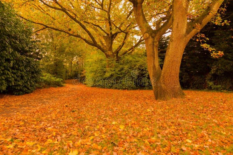 outono no parque Woking de Goldsworth foto de stock