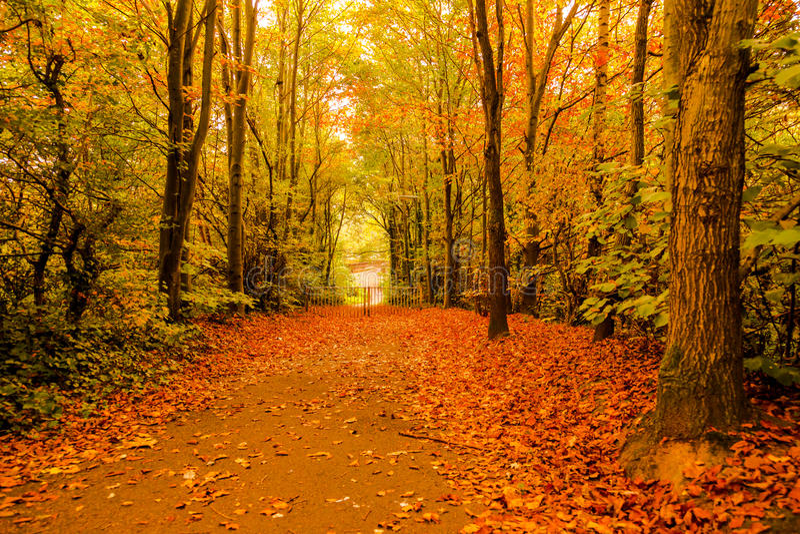 outono no parque Woking de Goldsworth imagens de stock