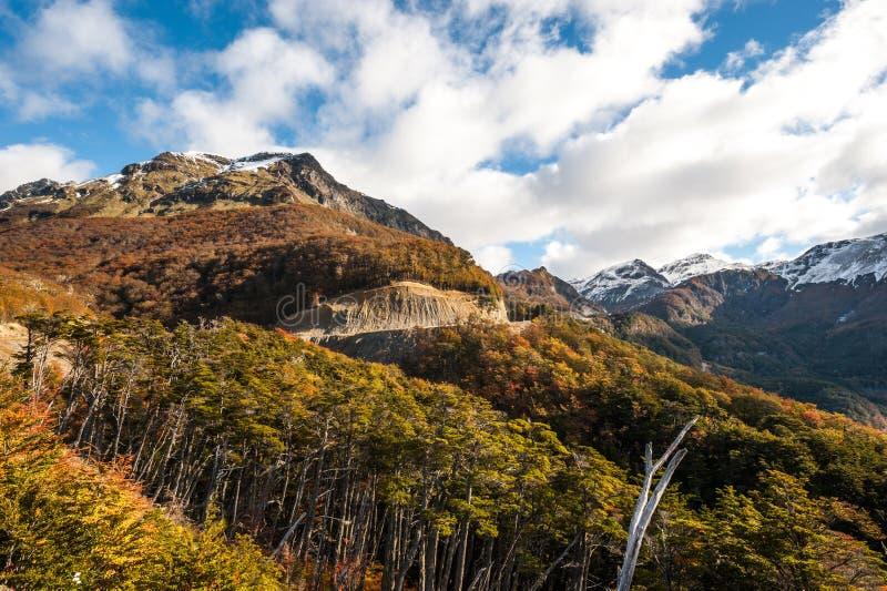 Outono no Patagonia Cordilheira Darwin, Tierra del Fuego imagens de stock