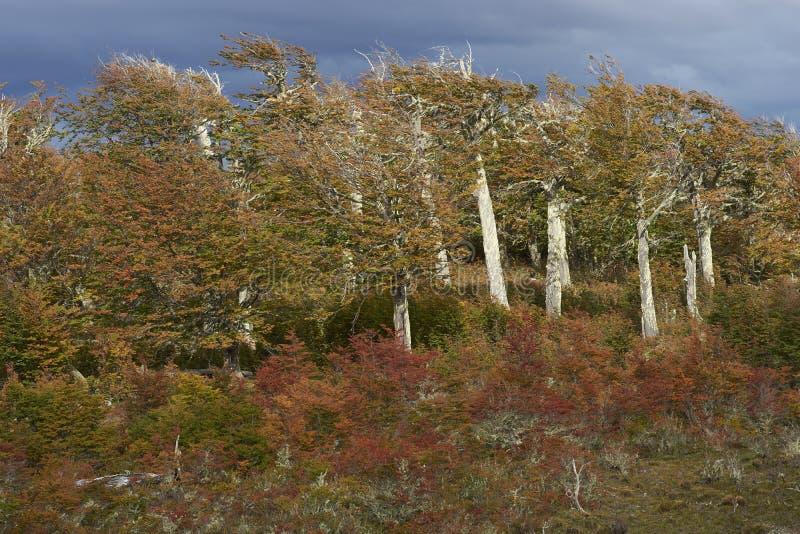 outono no Patagonia, o Chile imagem de stock royalty free