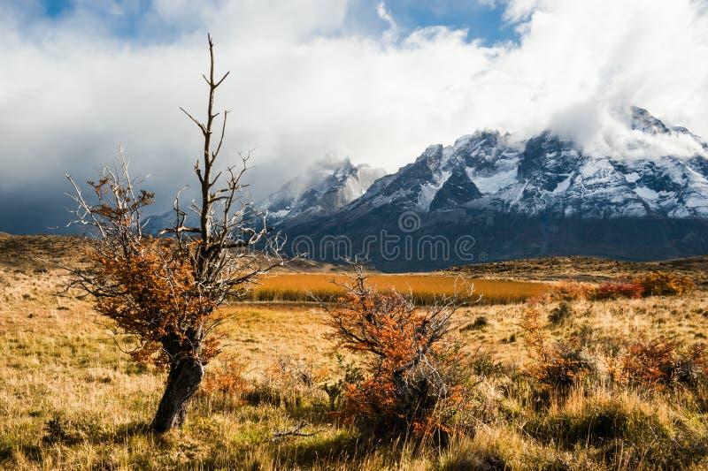 Outono no Patagonia O parque nacional de Torres del Paine foto de stock