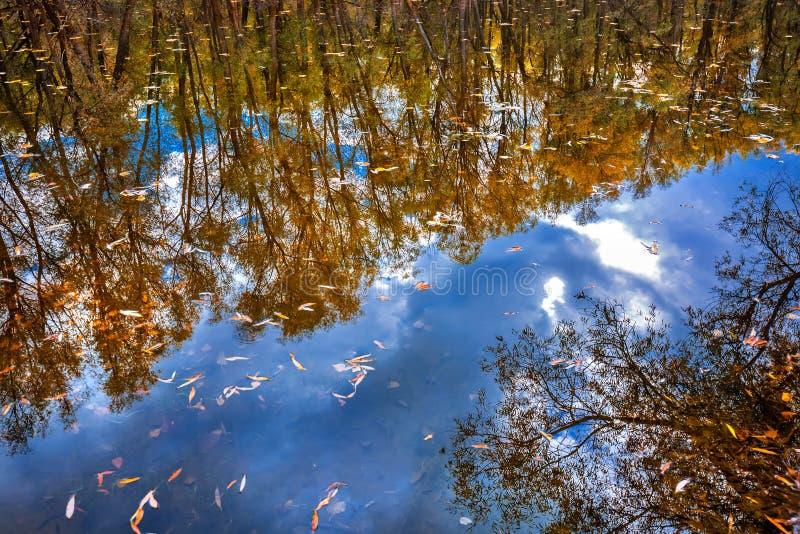 outono no rio Sibéria ocidental fotografia de stock royalty free