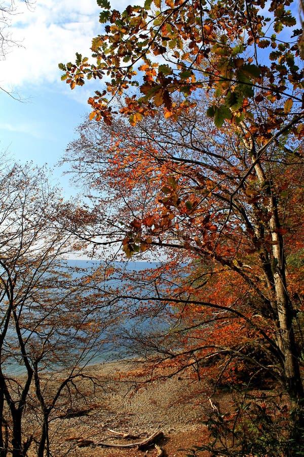 outono no seacoast imagem de stock royalty free
