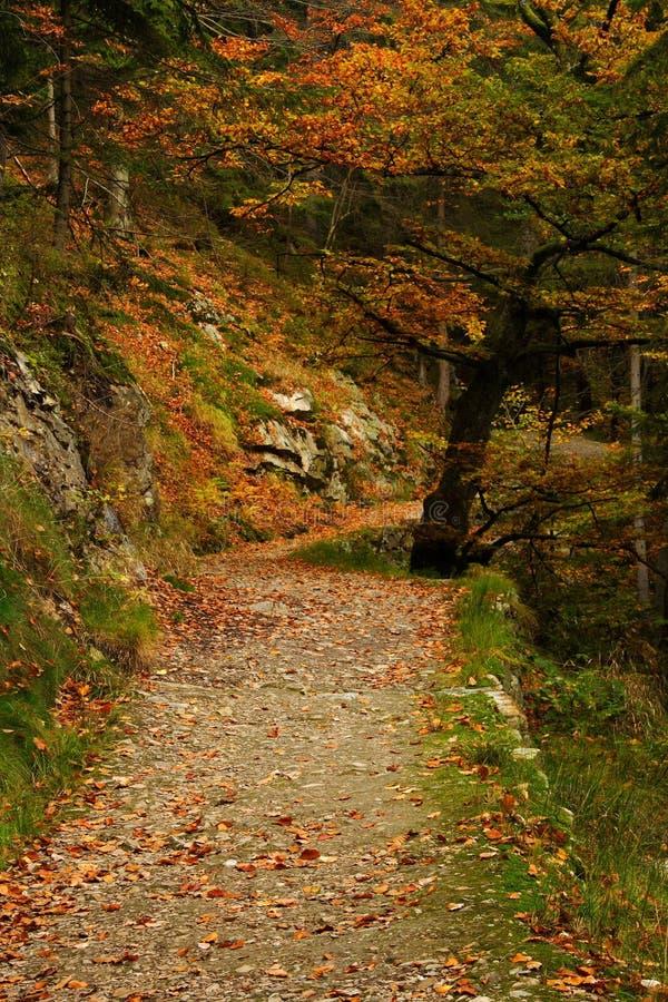 Outono no vale foto de stock