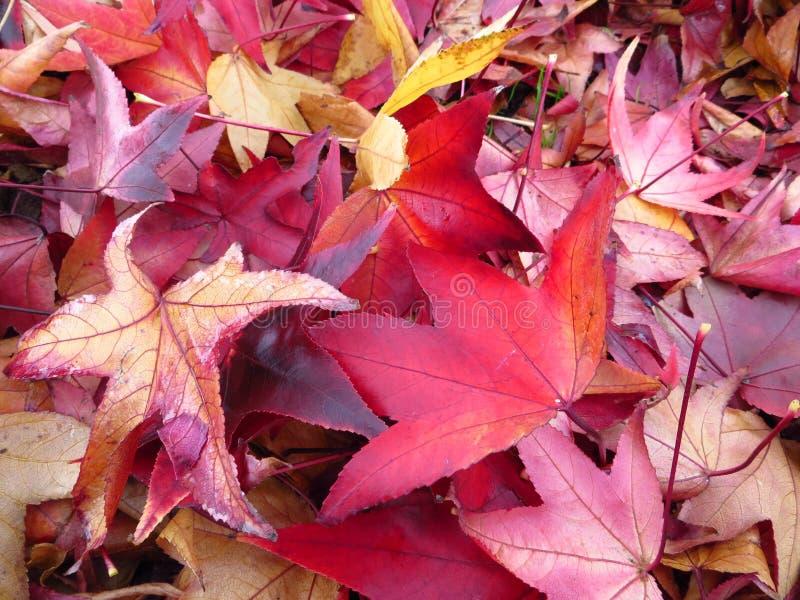 outono nos colores imagens de stock