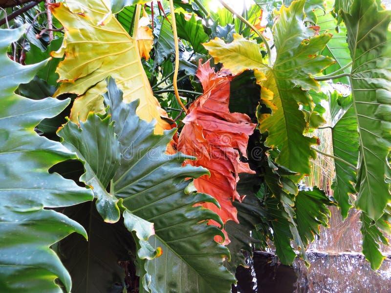 outono nos colores fotografia de stock