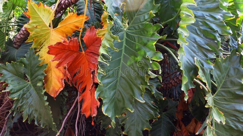 outono nos colores imagens de stock royalty free