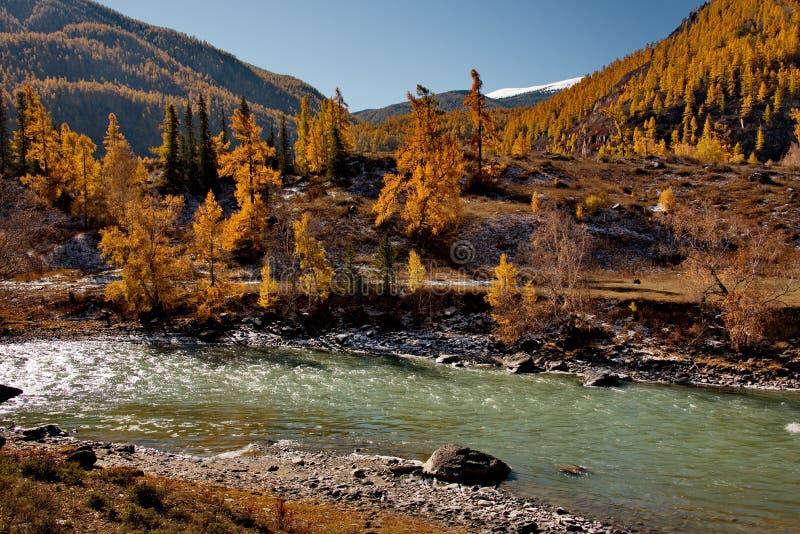outono nos rios da montanha Altai fotos de stock