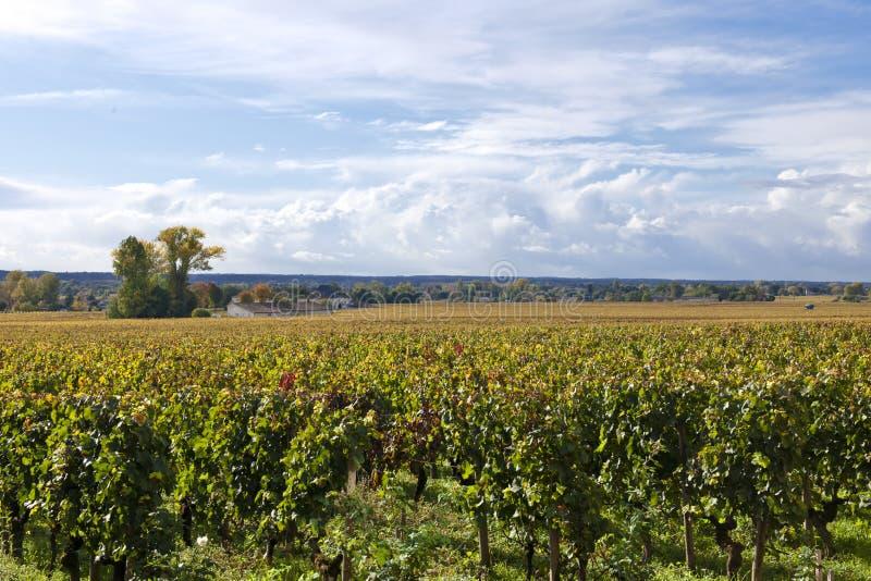 outono nos vinhedos do Bordéus, França foto de stock