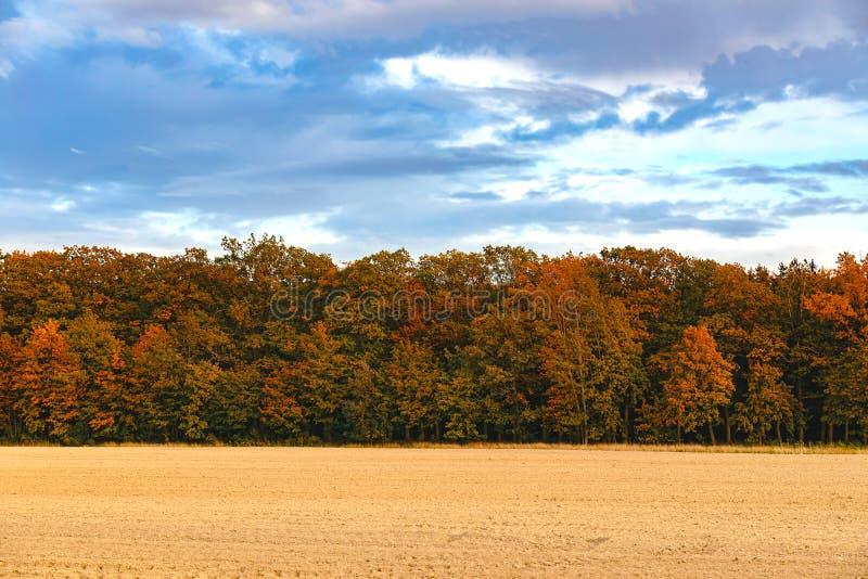 Outono, paisagem de outono com árvores cheias de folhas coloridas e caídas imagens de stock royalty free
