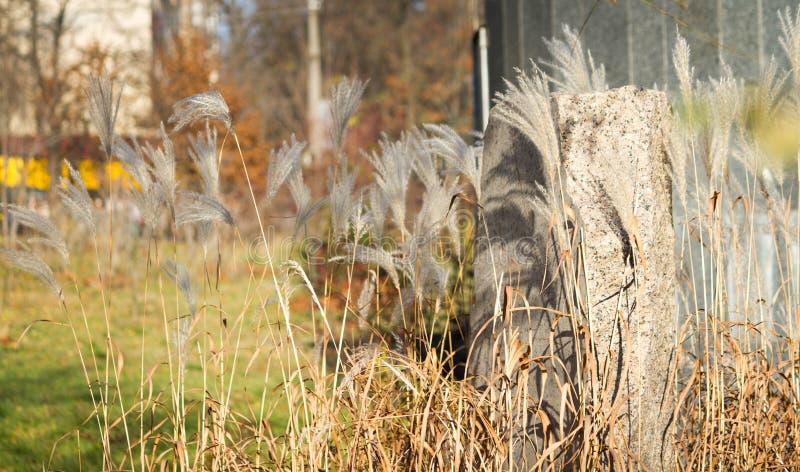 outono, pedra e juncos no parque fotografia de stock