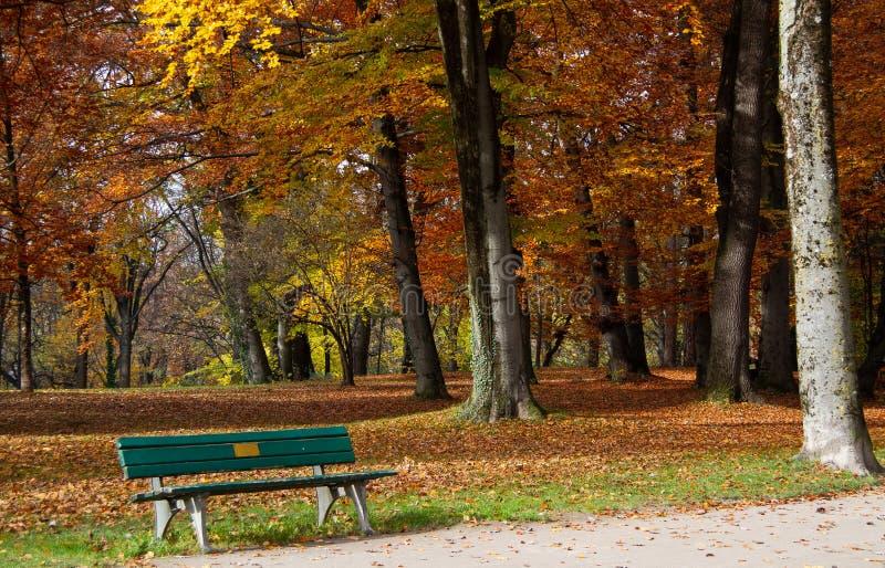 outono Queda Árvores do ouro em um parque no aspecto colorido da folha típica, com um banco no primeiro plano fotos de stock royalty free