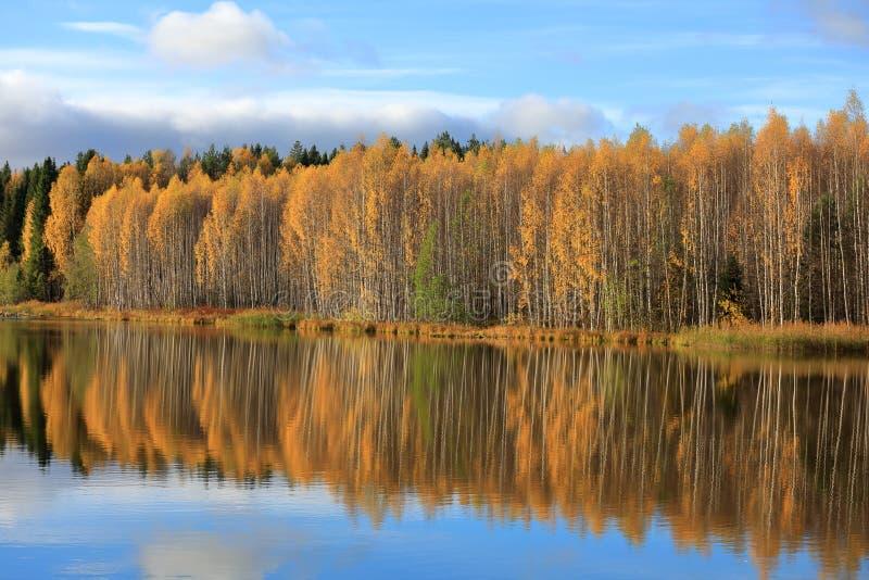 outono Reflexão de árvores amarelas na água azul foto de stock royalty free