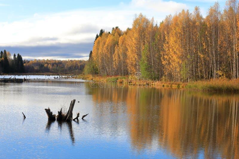 outono Reflexão de árvores amarelas na água azul fotos de stock