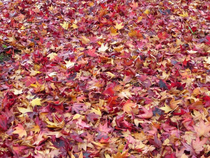 outono Spacial nos colores fotografia de stock royalty free