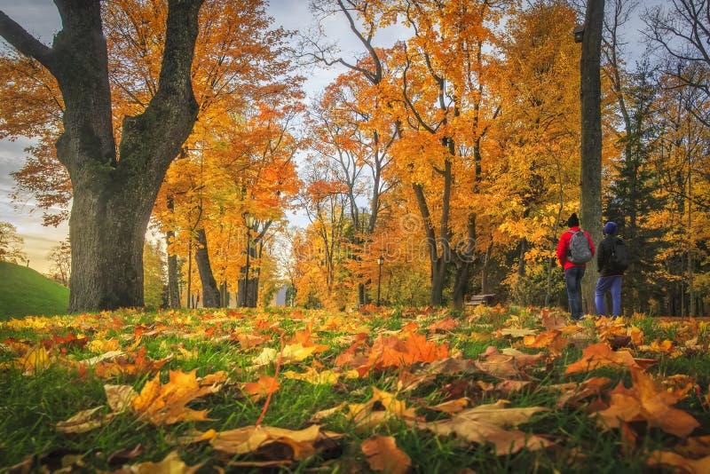 outono surpreendente folhas de outono no parque colorido Paisagem da queda Árvores amarelas e vermelhas na aleia imagem de stock royalty free