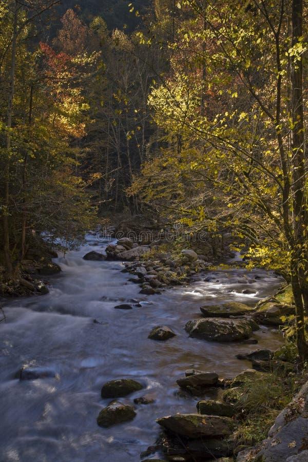 Outono, Tremont, Smokies NP, TN fotos de stock