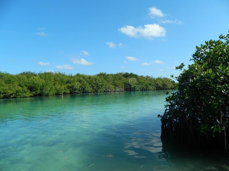 Outro em um dos lagos os mais famosos em cancun imagens de stock