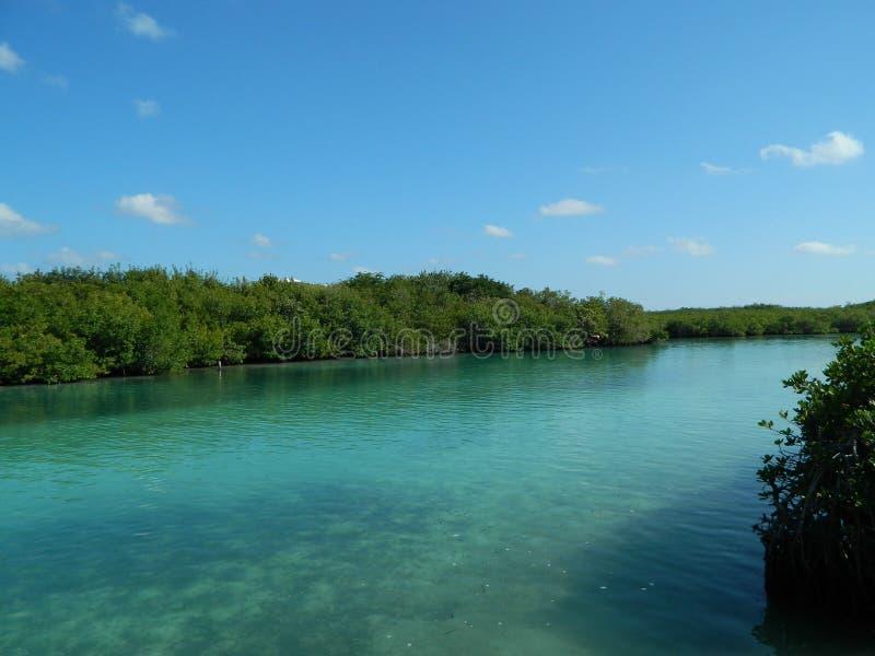 Outro em um dos lagos os mais famosos em cancun foto de stock