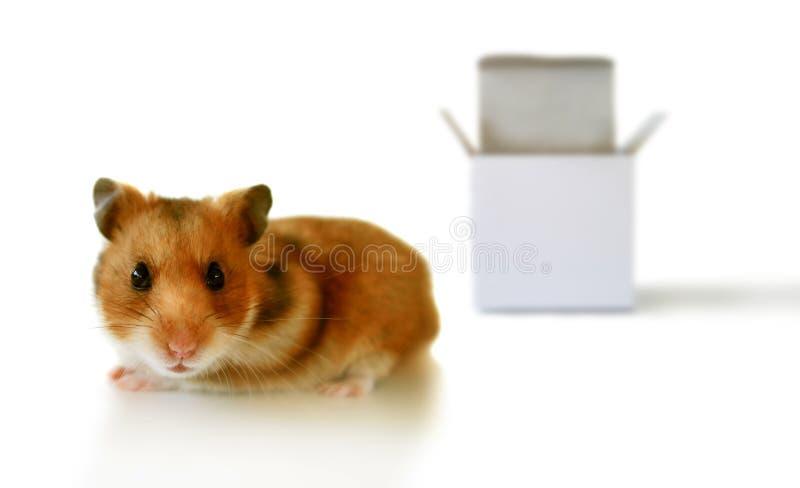 Outside the box. Hamster outside the box
