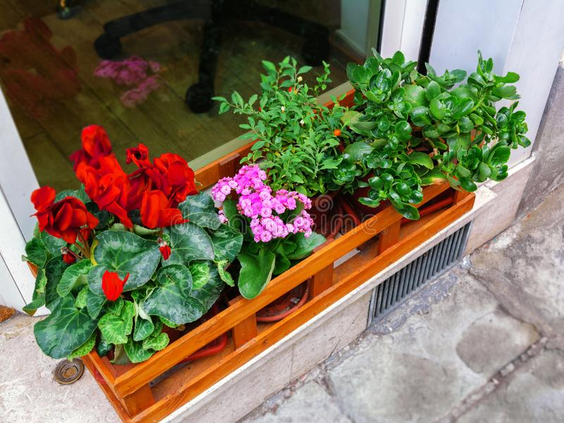 Outside front door decoration – blooming red and purple flowers in wooden box stock image