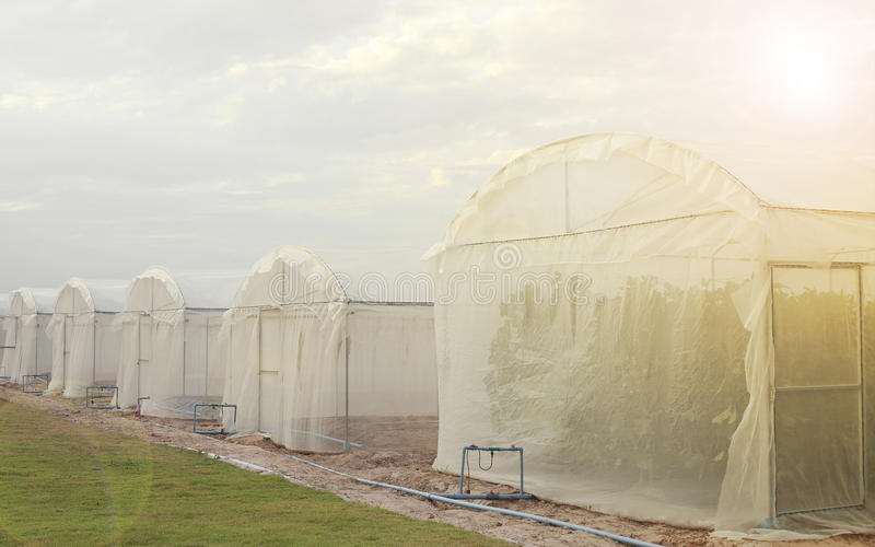 Outside of greenhouses for growing organic plant.  royalty free stock photography