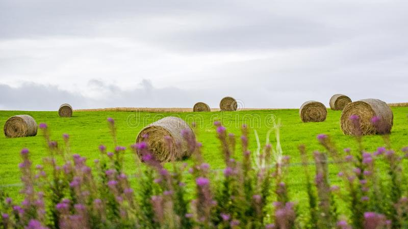 British pastoral scenery stock photography