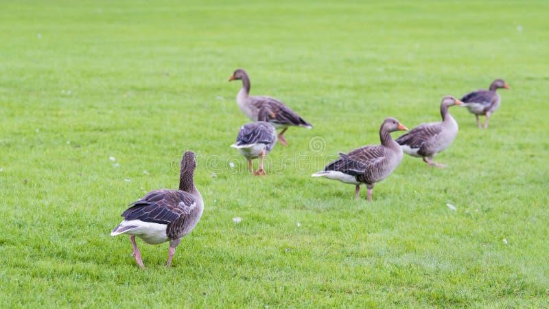British pastoral scenery royalty free stock photos