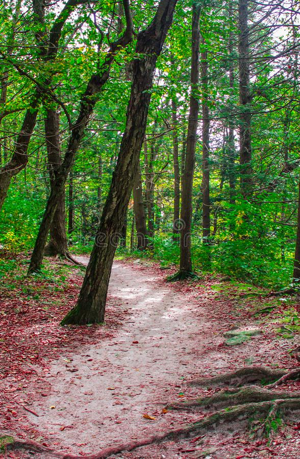 Outstanding Forest Trail stock images