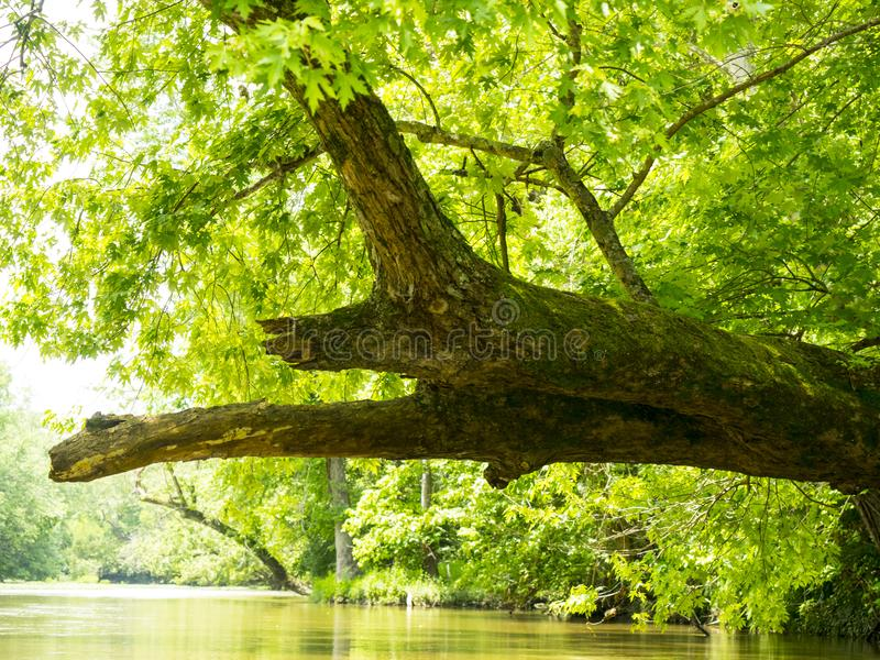 Outstretched branch resembling dragon or lizard royalty free stock photography