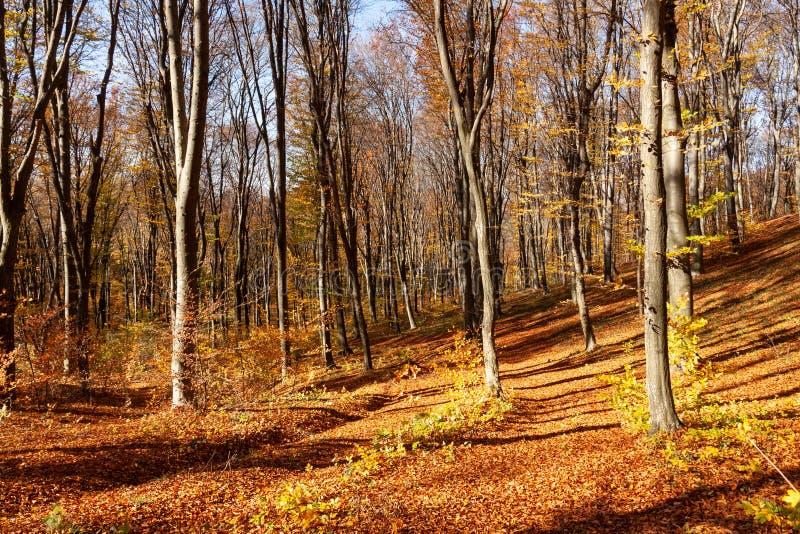Outum skog i solig dag royaltyfria foton
