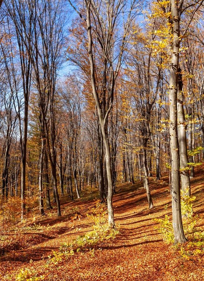 Outum skog i solig dag royaltyfria bilder