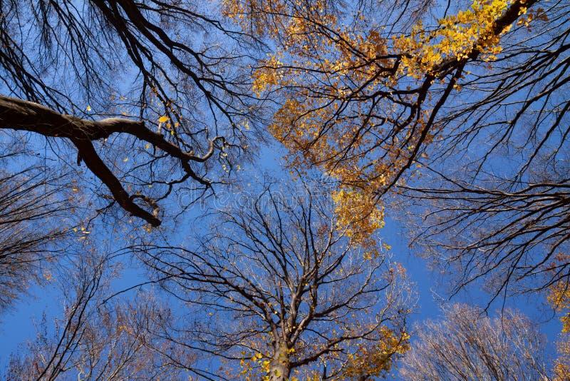 Outum skog i solig dag arkivbild