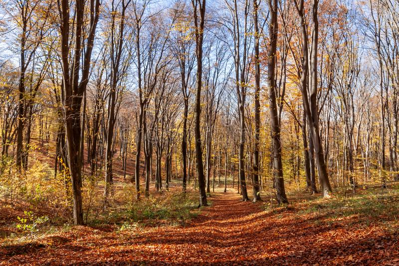 Outum skog i solig dag royaltyfri bild