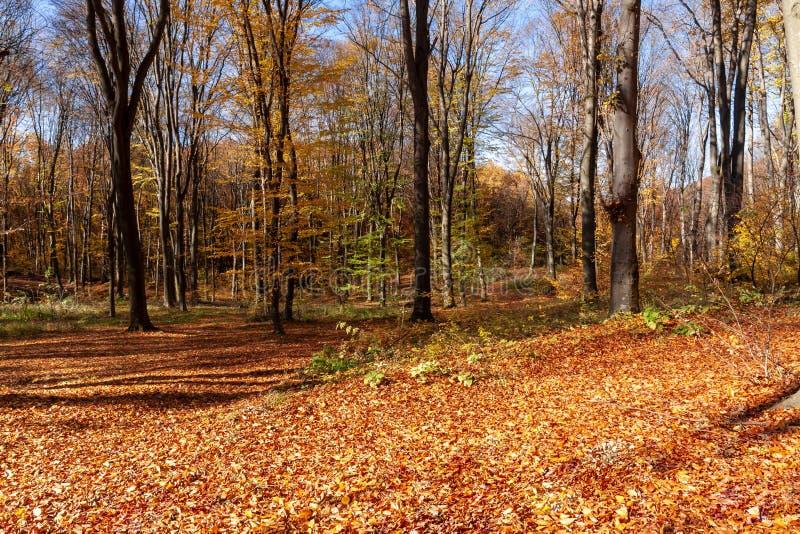 Outum skog i solig dag royaltyfri fotografi