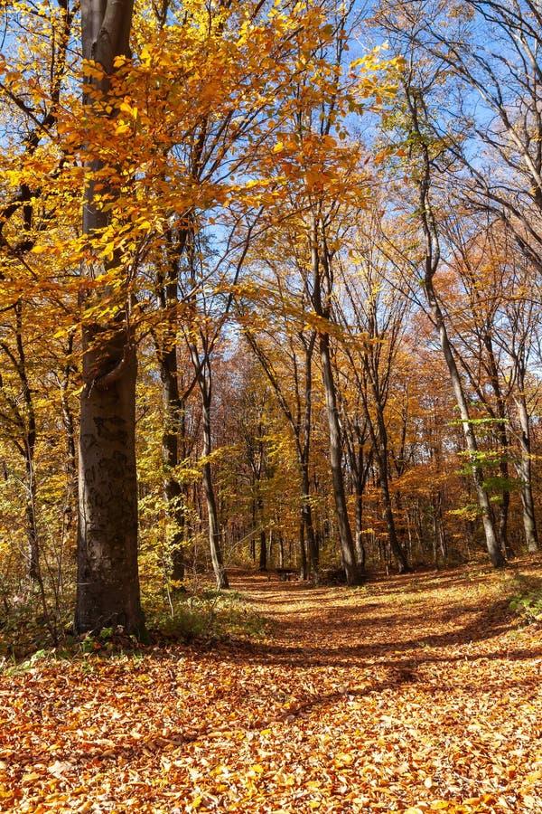 Outum skog i solig dag arkivfoton