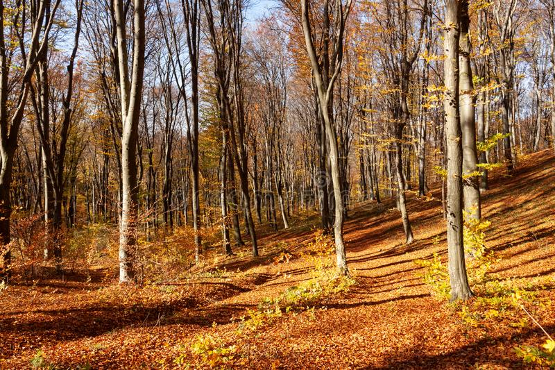 Outum forest in sunny day royalty free stock photos