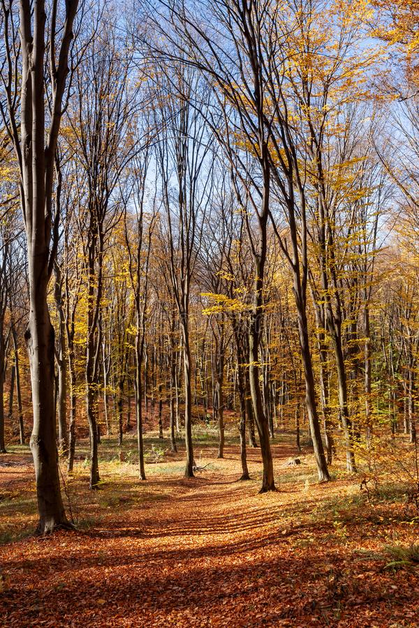 Outum forest in sunny day stock photos