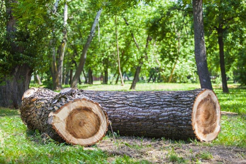 Ouverture en bois un champ vert de forêt photos libres de droits